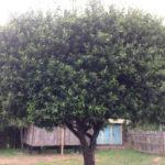 kenya-farming01