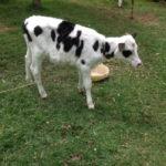 kenya-farming03