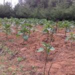 kenya-farming05